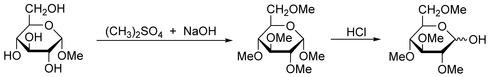Haworth Methylation