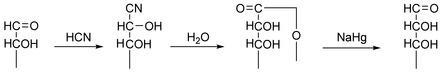 Kiliani-Fischer Synthesis