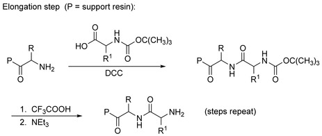 Merrifield Solid-Phase Peptide Synthesis